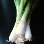 In the Box — CSA Week 7 {Sweet Scallion Shrimp}